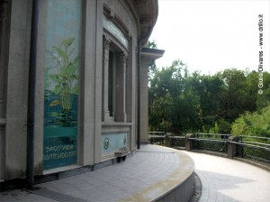 Ceramiche Richard Ginori: Sagittaria Montevidensis, Milano, Acquario Civico