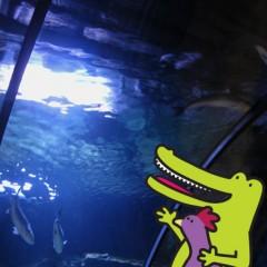 Drillo e Pollo all'acquario